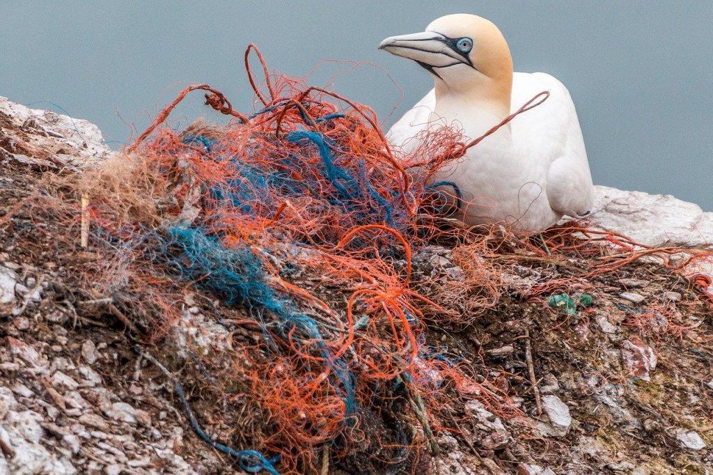 Ein normales Bild: Die Basstölpel auf der Insel Helgoland bauen ihre Nester zu 95 Prozent aus Plastik, da sie die Schnüre mit Algen verwechseln. Nicht selten erwürgen sie sich selbst in dem Plastikmüll.